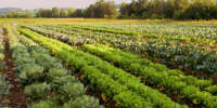 légumes à cueillir directement dans le champ
